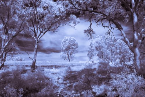 Bush Infrared by Matt Oliver