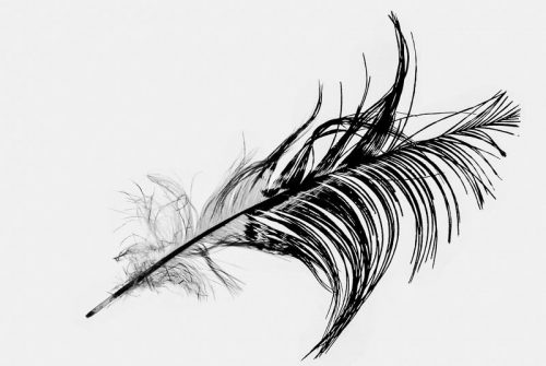 'Feather' by Mal Brayshaw