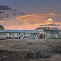 'Shearing Shed In Goornong' by Felicity Johnson