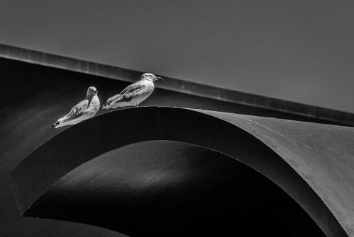 'City Gulls' by Mal Brayshaw