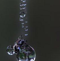 'Silky Drops' by Marie Boschert