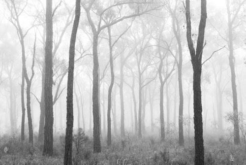 'Fog In The Wellsford' by Felicity Johnson