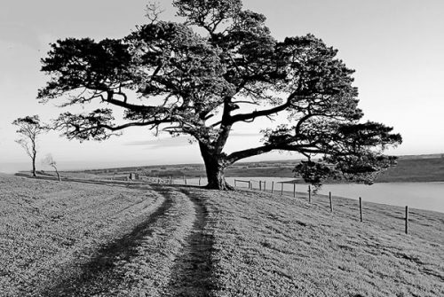 'Sunset Tree' by Jenny Peters
