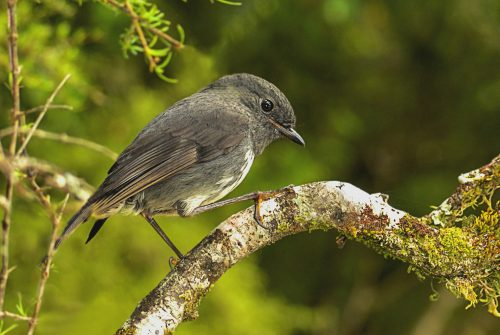 'Bird Study'
