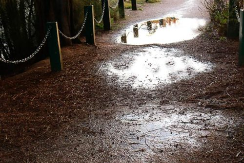 'Puddles In Lane' by Coral Symons