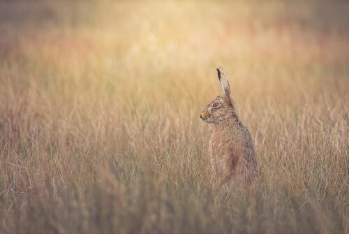 'Hare Having A Stare' by Felicity Johnson