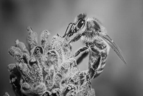 'Bee Happy' by Elaine van Dyk