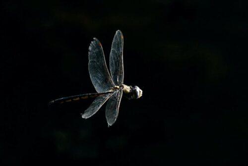 'Dragonfly-Ing' by Alan Battye