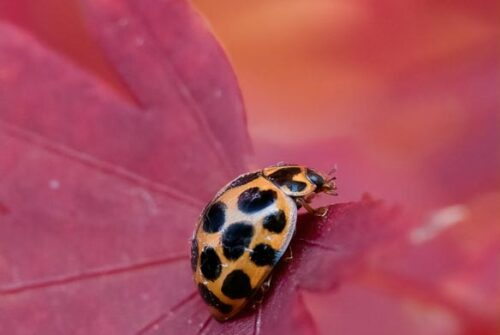 'Looking Hot With Spots' by Felicity Johnson