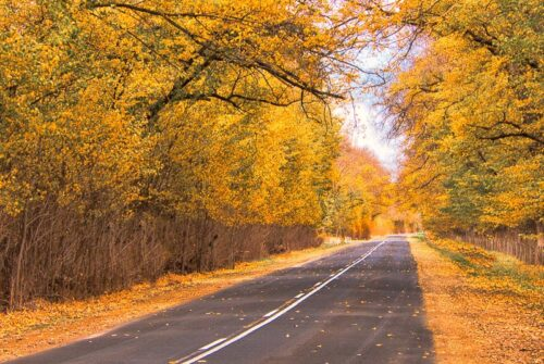 'Penola SA In Autumn' by Allan Davis
