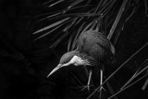 'Dark Pond' by Felicity Johnson. Winning Digital Monochrome October